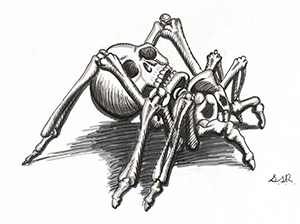Illustration of a Spider made up entirely of bones