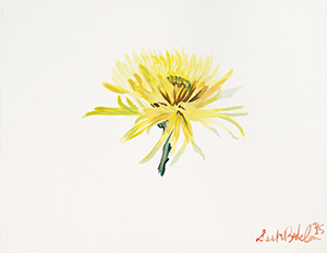 Painting of a Chrysanthemum