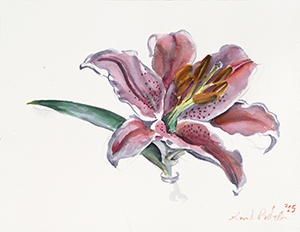 Painting of a Lily dlower