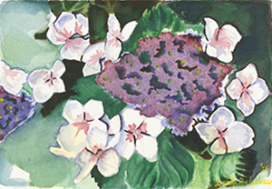 Watercolor Painting of a Hydrangea flower