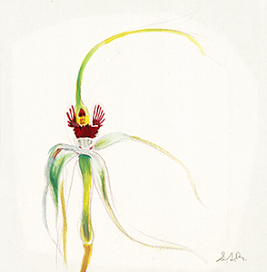 Watercolor Fine Art Painting of an Orchid Flower