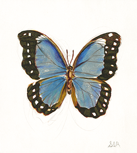 Fine Art Watercolorr Painting of the a Blue Morpho Butterfly