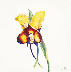 Watercolor Painting of an Orchid