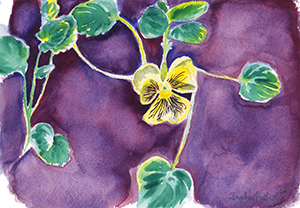 Watercolor Fine Art Painting of a Pansy Flower