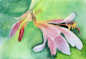 Watercolor Painting of a Day Lilly