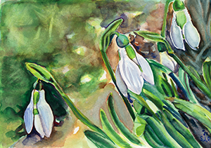 Painting of a Snow Drop Flower